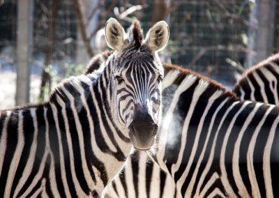 The Birmingham Zoo - Image 1