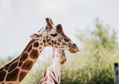The Birmingham Zoo - Image 3
